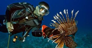 Lionfish Removal