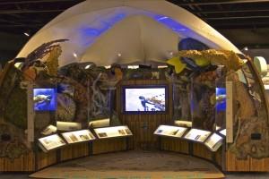 Sanctuary-Reef-Exhibit