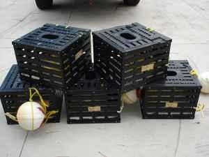StoneCrab traps stonecrab season