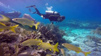 Protecting the Reef