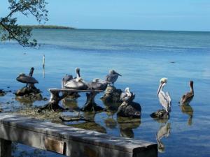 Florida Keys Beach Wildlife