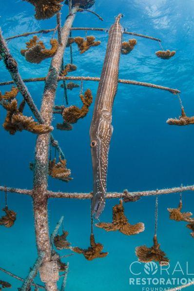 Florida Reefs