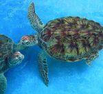 Florida Keys Rules Sea Turtles