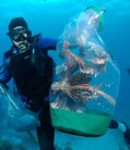 Lionfish Caught Underwater in the Florida Keys Ten Keymandments