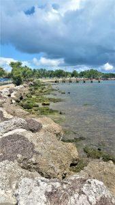 Harry Harris Park Shoreline