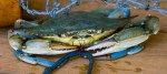 Blue Crab Fishing Rule Changes