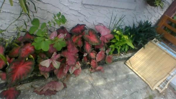 central florida landscaping plants