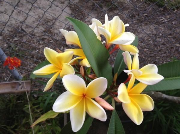 landscaping central florida
