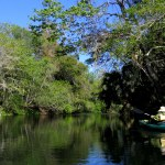 Lettuce Lake Park offers free nature tours on weekends