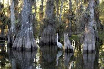 Everglades bird along Tamiami Trail