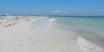 Perfect beach at Anclote Key