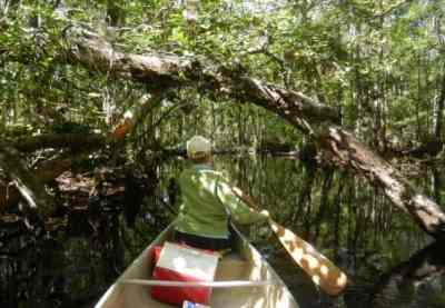 Kayaking Blackwater Creek near Orlando.