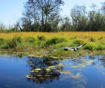 Turner River Kayak Trail, Big Cypress National Wildlife Refuge.