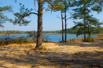 Little Lake Bryant, Ocala National Forest