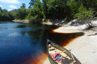 The Suwanee is a blackwater river, which means its color comes from tannins in decaying vegetation.