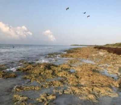 The rocky shoreline along Bahia Honda's Sandspur Campround. (Photo: Bonnie Gross)
