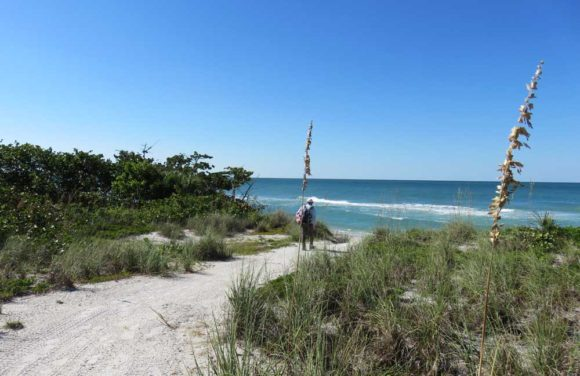 The sand path to the beach at Don Pedro Island State Park, Cape Haze.
