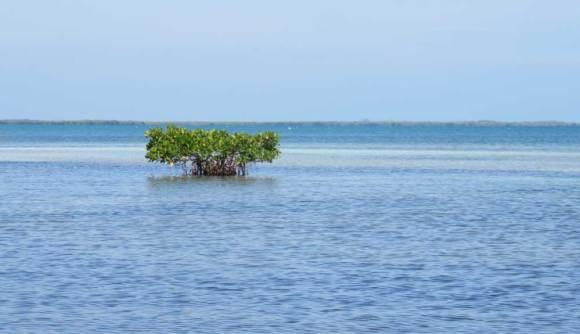 The peaceful bay side of Bahia Honda State Park in the Florida Keys. (Photo: Bonnie Gross)