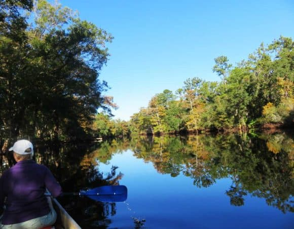 The Withlacoochee plays second fiddle to the Rainbow River, but it is exquisite. (Photo: Bonnie Gross)