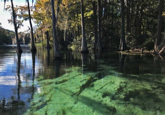 Water clarify on Rainbow River is extraordinary. (Photo: Bonnie Gross)