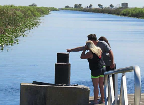 Spotting wildlife at a boat ramp at a recreation-access stop along Alligator Alley. (Photo: David Blasco)