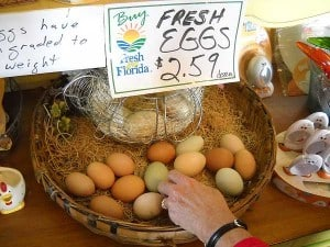 Fresh eggs at Henscratch Farms Vineyard, Lake Placid, Florida