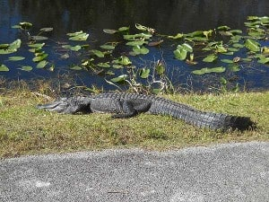 Everglades National Park Shark Valley