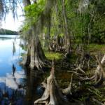 Hontoon Island is an island in the St. Johns River.