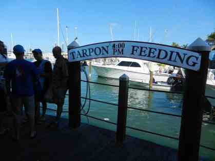 In front of Alonzo's Oyster House at the foot of Front Street, tarpons are fed every day at 4 p.m.
