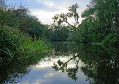 Shell Creek: Beautiful kayak river near Punta Gorda