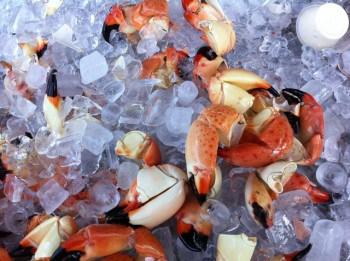 stone crabs