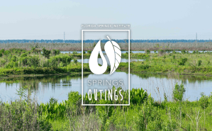 Springs Outing: Sweetwater Wetlands Tour w/ Dr. Robert Knight (CANCELED)