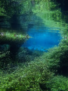 Submerged Aquatic Vegetation at Ruth B. Kirby Gilchrist Blue Springs State Park
