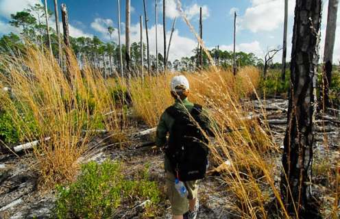 Florida Trail Hiking