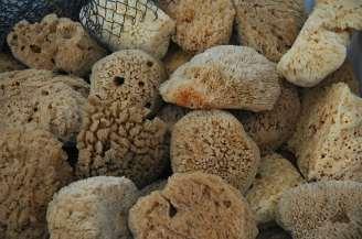 Sponges at Tarpon Springs
