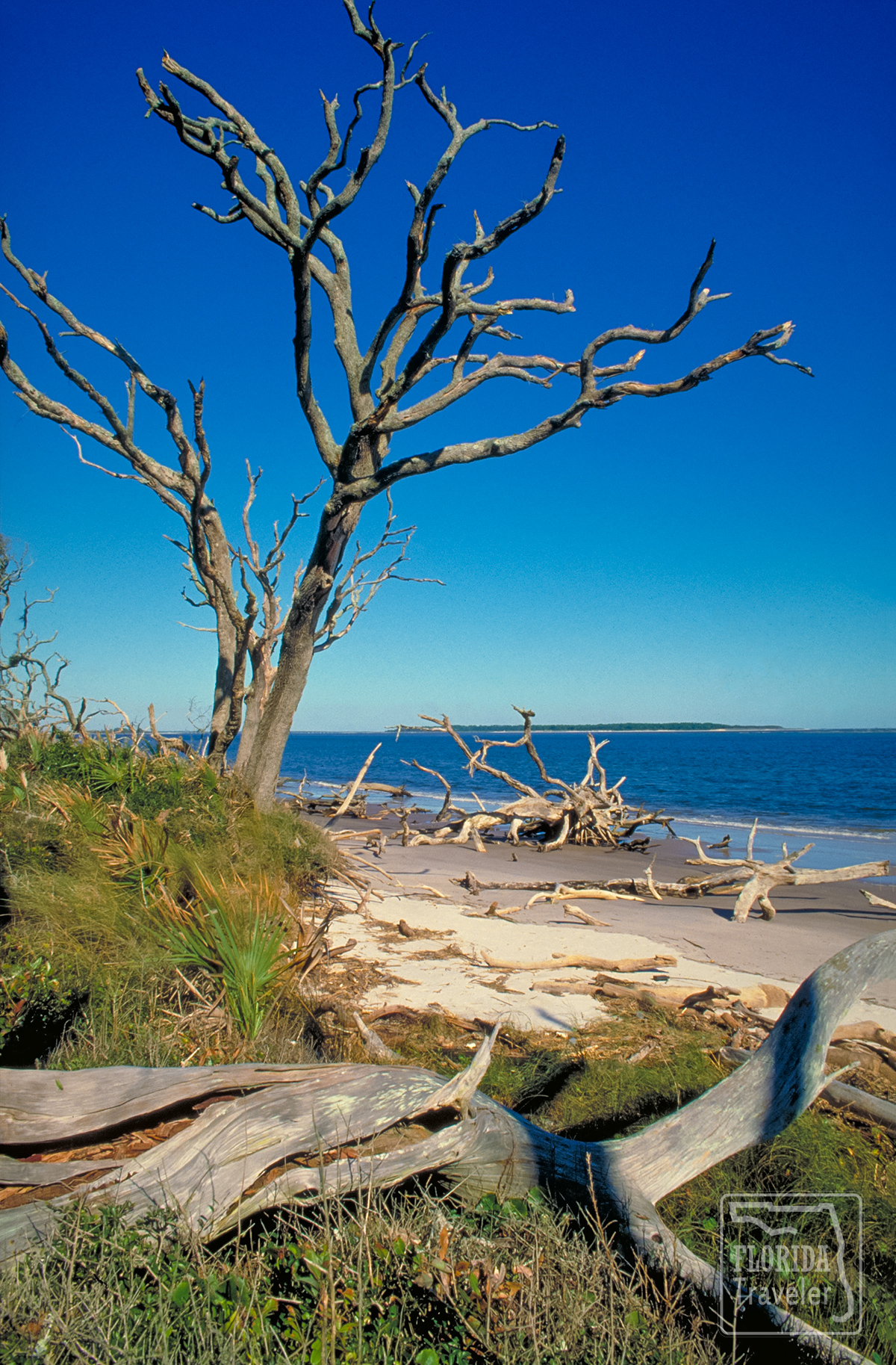 Driftwood on Talbot Island