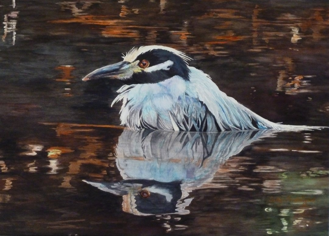 Ford-Lyles, Sally - Yellow Crowned Night Heron