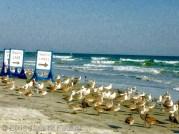 Les locaux de New Smyrna Beach