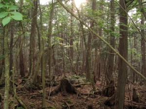 _wikipedia_commons_2_2f_Aokigahara_forest_04