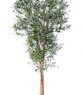 Olivo alto 2.10 mtrs