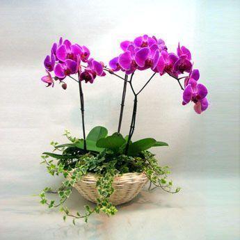 comprar orquideas