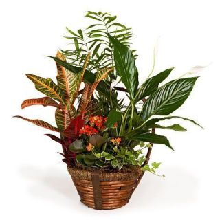 cesta-de-plantas-variadas-con-chamaedorea-y-spatiphyllum