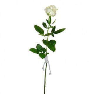 rosa-blanca-preservada