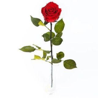 rosa-roja-preservada