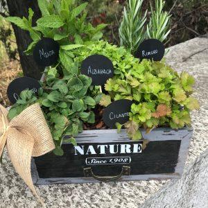 Caja de plantas aromáticas
