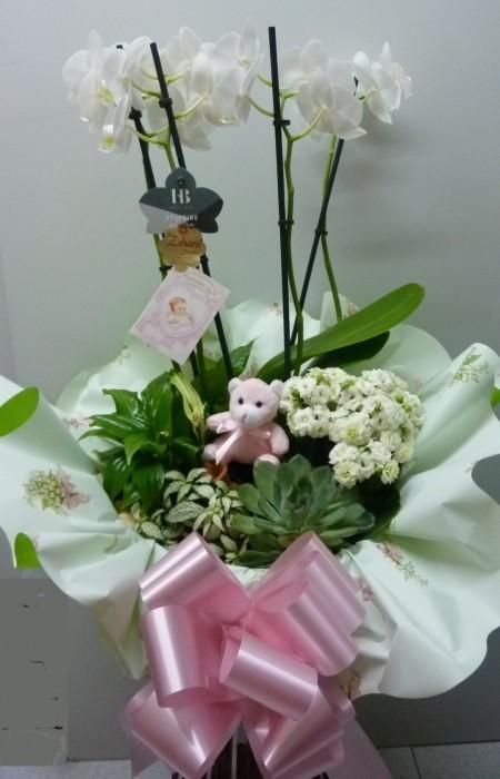 cesta orquidea con peluche