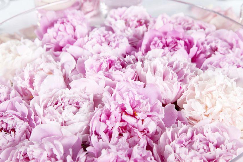 Blumen_058_LR