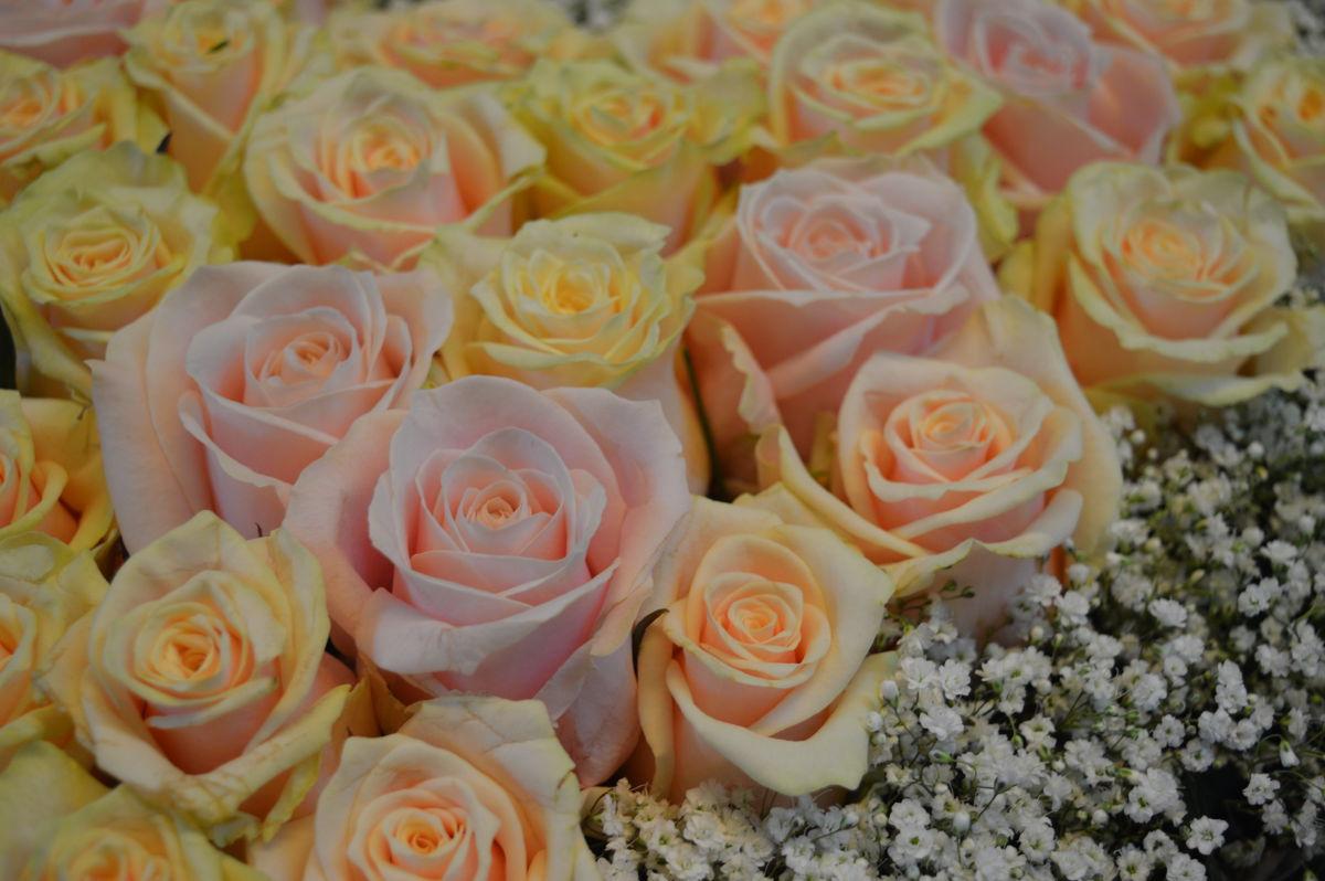 Blumen Geschenke Zur Hochzeit Blumen Zur Hochzeit Schenken Awesome