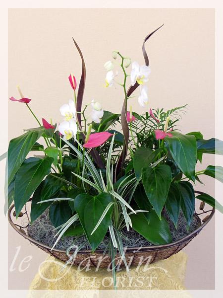 Planters and Live Plants  FLORIST PALM BEACH GARDENS  5616278118