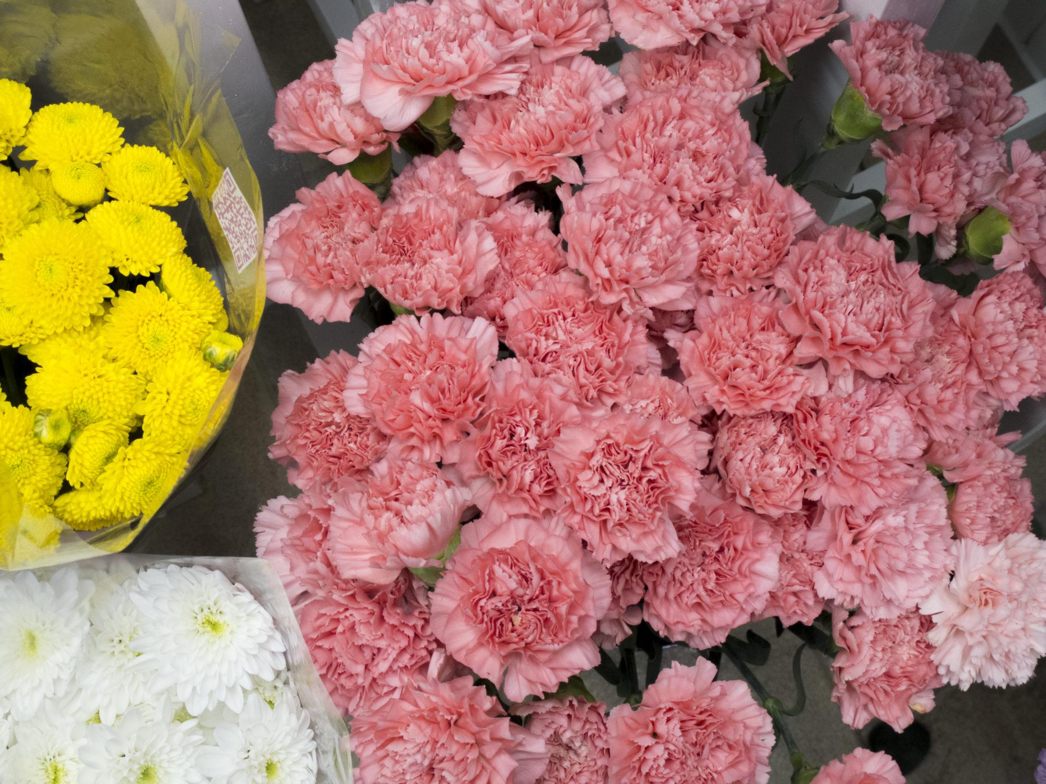 Flores temporada  floryfauna